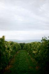 Carpassion-Weinprobe und Oldtimer-Treffen in Alzey