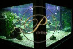 PRIVILEG, memberclub und das größte private Aquarium in Europa