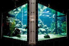 das Markenzeichen des PRIVILEGs: Das größte private Aquarium Europas, früher sogar mit Salzwasser und Haifischen. Aufgrund des Tierschutzes und einer artgerechten Haltung verzichten wir heute allerdings auf die Haifischhaltung....  Böse Zungen behaupten