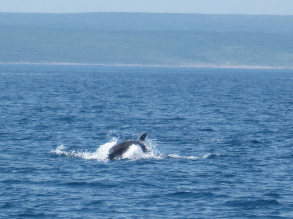 Delphinsichtung