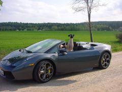Lamborghini Gallardo Spieder privat 037
