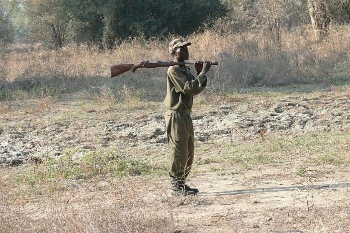 "Unser Parkranger bei einer ""Walking Safari"" - Nsefu Sektor - South Luangwa - Zambia"