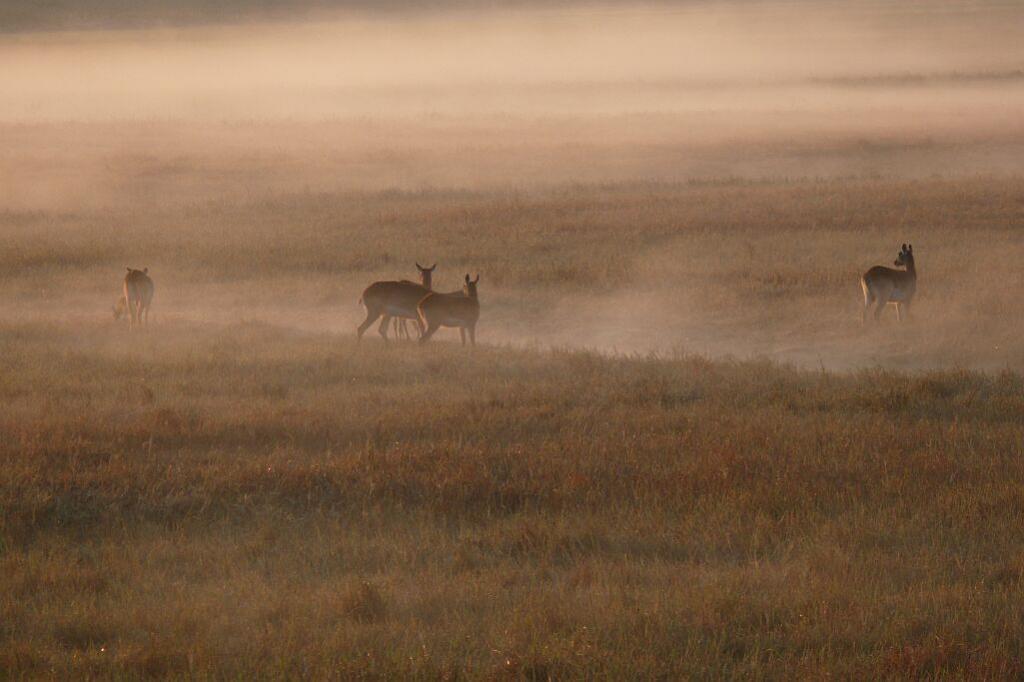 Ein Morgen in den Busanga Plains - Kafue Nationalpark - Zambia