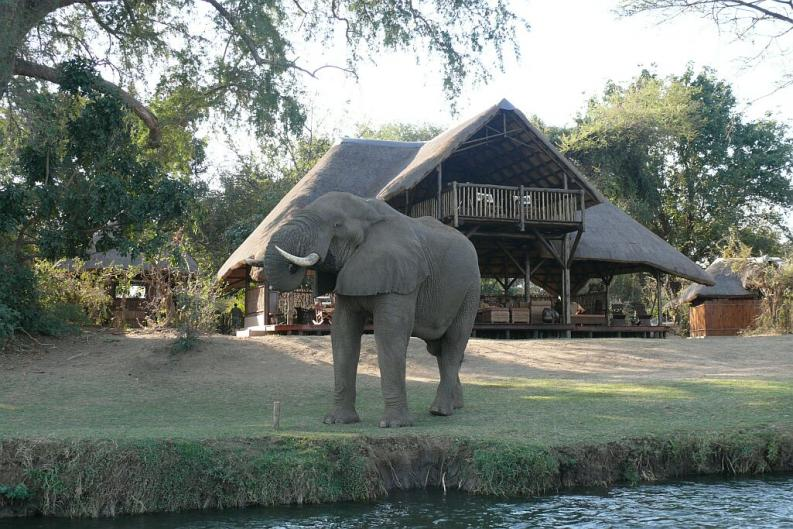 Wilder Elefantenbulle beim trinken - Chiawa Camp - Lower Zambezi - Zambia
