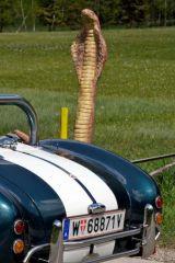 "Cobra ""mit Wappentier"" oder ""mit rollendem Nachfolger"". Alles ne Frage des Blickwinkels."