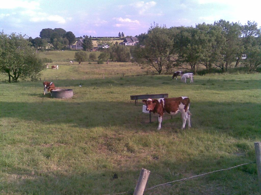 Bukolische Idylle bei Wirtzfeld/Ostbelgien
