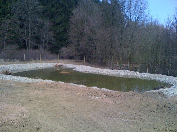 Bilster Berg drive resort  Ausgleichsfläche 2  für Frosch und Lurch
