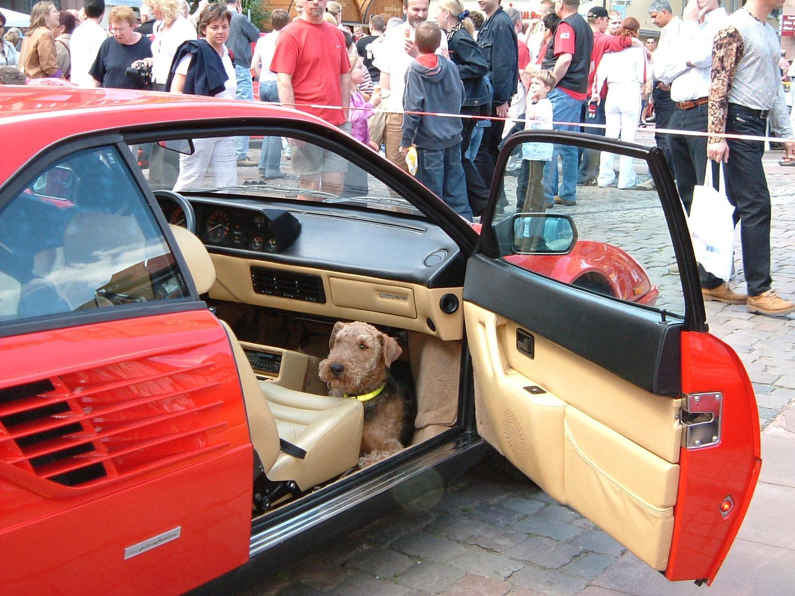 Hundefurhrwerk Ferrari Mondial Coupe.JPG